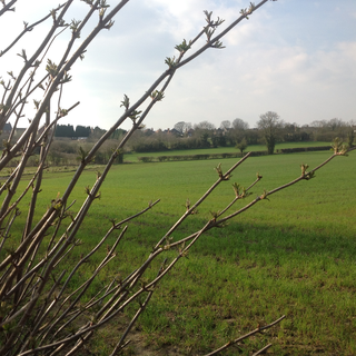 Site for new houses near Hugglescote